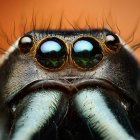 Magnificent Macros: 25 Intriguing Insect Close-Ups