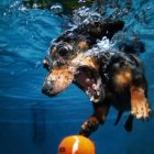 Underwater Dogs: 11 Dives That Looks Funny Yet Terrifying