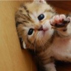 21 Cute Animals Sacrificing Themselves For Your Life